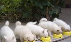狗狗到底适合喝什么奶?