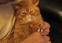 如何帮猫主子惬意的剪指甲