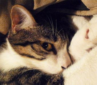 猫咪晚上不睡觉怎么回事?