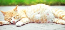 猫咪怀孕只吃猫粮可以吗?