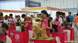 这个宠物节有点厉害,国内首次举办,名猫名狗当起了豪车车模