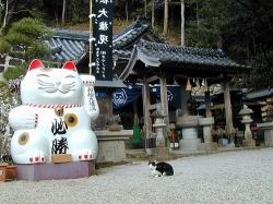 """日本兴起""""猫咪经济学"""" 宠物猫数量首超宠物狗"""