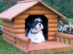 狗狗的记忆力究竟有多强?