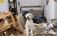 为什么狗狗总想拆了你的家?